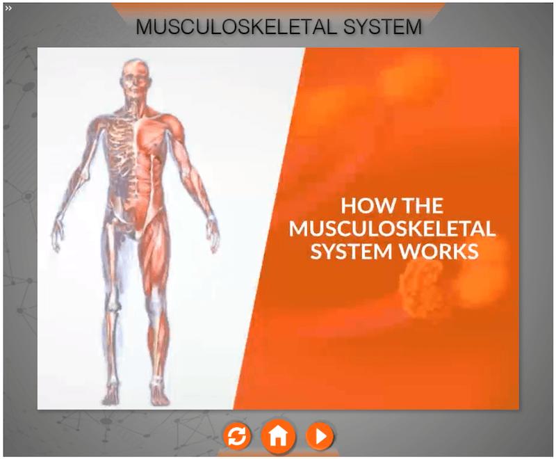 MusculoskeletalSystemTraining